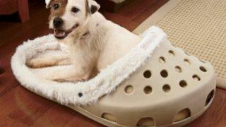 愛犬が喜ぶシューズタイプのベッド/Dog Bed In The Form Of A Shoe