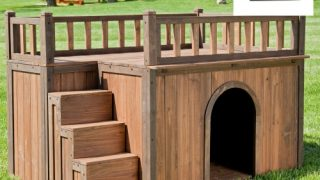 Stair Case Dog House