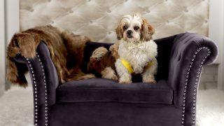 上品な素材感のお洒落ドッグベッド/Dachshund Dog Sofa
