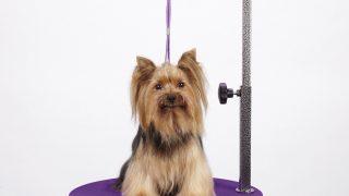 コンパクトなグルーミングテーブル/Master Equipment Pet Grooming Table