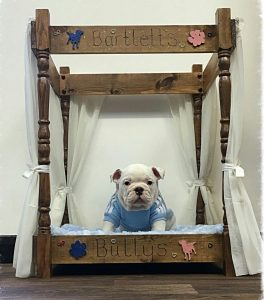 Dog Double Bunk Bed
