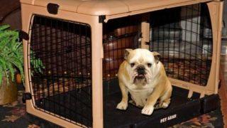 4 Door Folding Dog cage