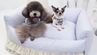 パステルカラーの可愛いドッグベッド/Handmade Princess Dog Bed