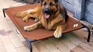 夏場に最適なクールドッグベッド/Coolaroo Elevated Dog Bed