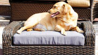 暑い夏場も快適なラタン製ドッグベッド/Rattan Dog Sofa