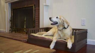 エコで丈夫な人工木材のドッグベッド/Medium Habitat  Dog Bed